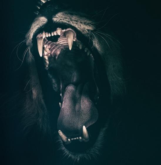 占い が 抜ける 歯 夢