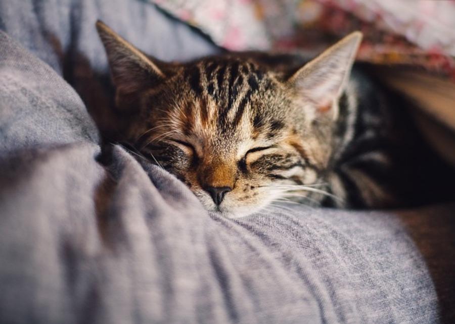 【夢占い】猫の夢の意味とは?猫は女性らしさの象徴。猫の見た目や状況別に解説!